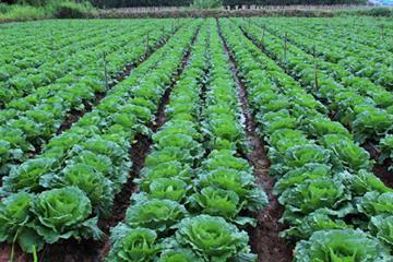 Sẽ mở rộng hạn điền cho SX nông nghiệp quy mô lớn