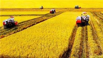 3 nhóm đối tượng được miễn thuế sử dụng đất nông nghiệp