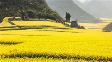 Thủ tục xin giao đất, thuê đất không thông qua đấu giá