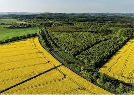 Án lệ số 40/2021/AL về công nhận việc chuyển đổi quyền sử dụng đất trên thực tế