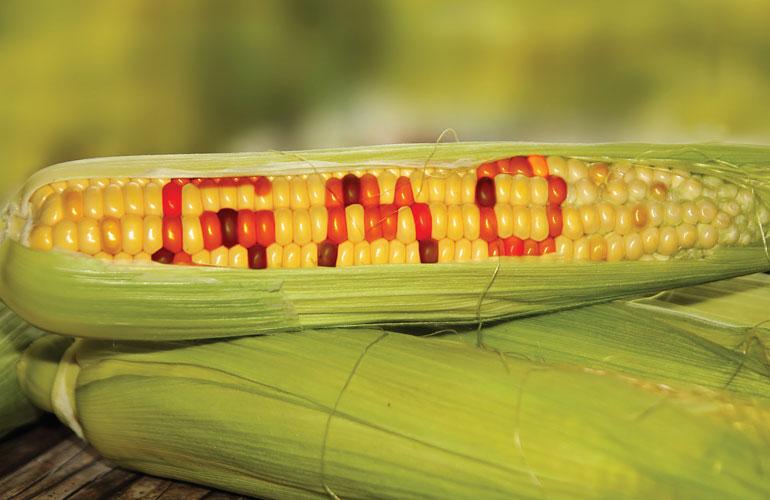 Kinh doanh thực phẩm biến đổi gen cần điều kiện gì?