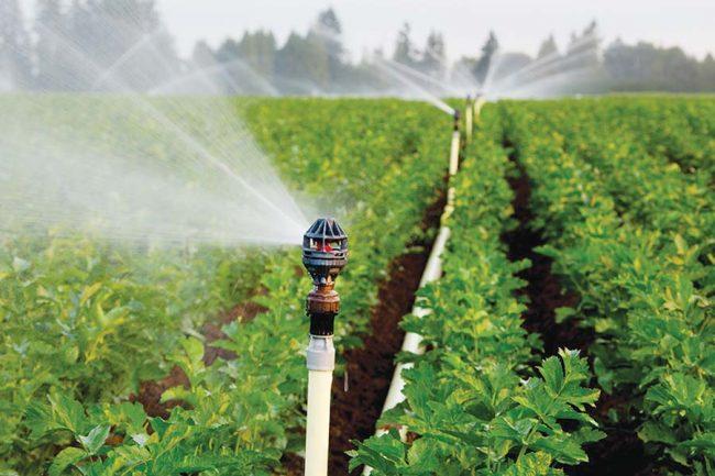 Hỗ trợ 50% chi phí đầu tư hệ thống tưới tiết kiệm nước