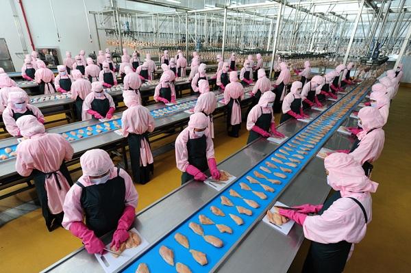 Thí điểm đưa người lao động đi làm việc thời vụ tại Han Quốc