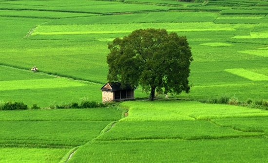 Thủ tục chuyển đất nông nghiệp sang đất ở