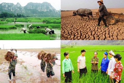 Phí bảo hiểm nông nghiệp