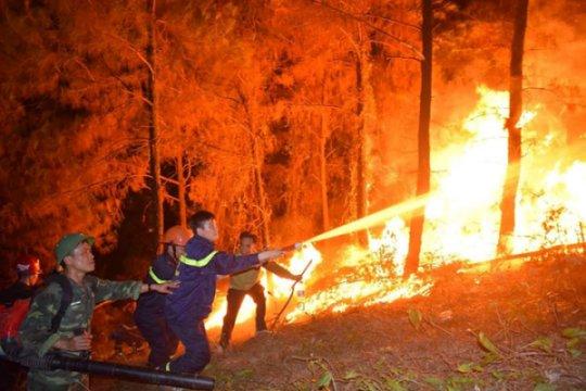 Phòng cháy chữa cháy rừng