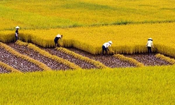 tặng cho đất trồng lúa