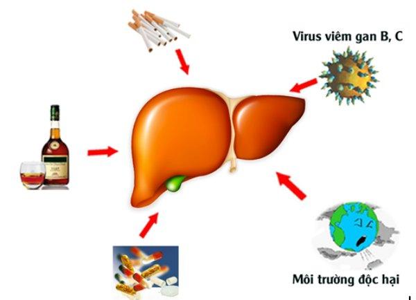 Điều trị viêm gan virus B cấp