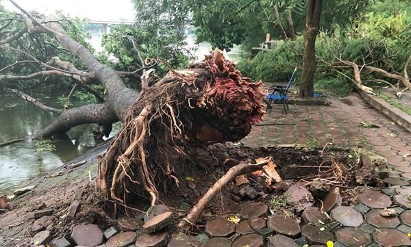 cây đổ trong mùa mưa bão