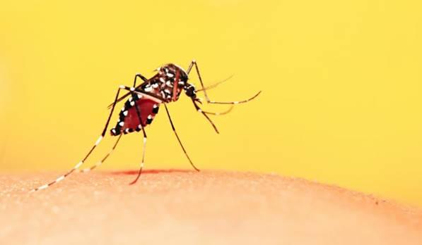 hướng dẫn điều trị sốt xuất huyết Dengue