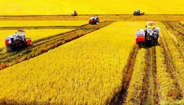 miễn thuế sử dụng đất nông nghiệp