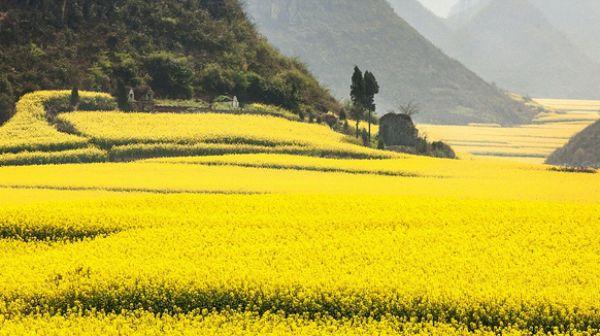 giao đất thuê đất không thông qua đấu giá