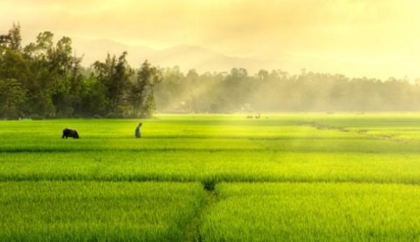 miễn thuế đất nông nghiệp