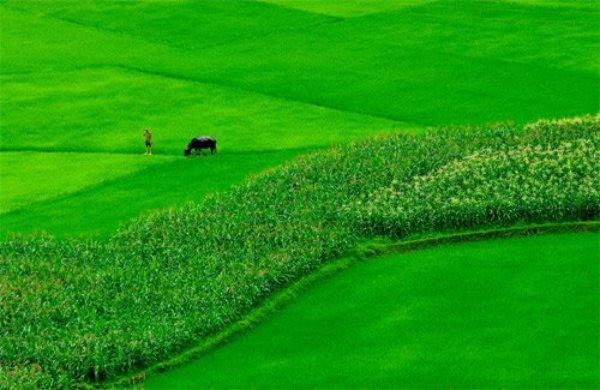 Xác định người trực tiếp sản xuất đất nông nghiệp
